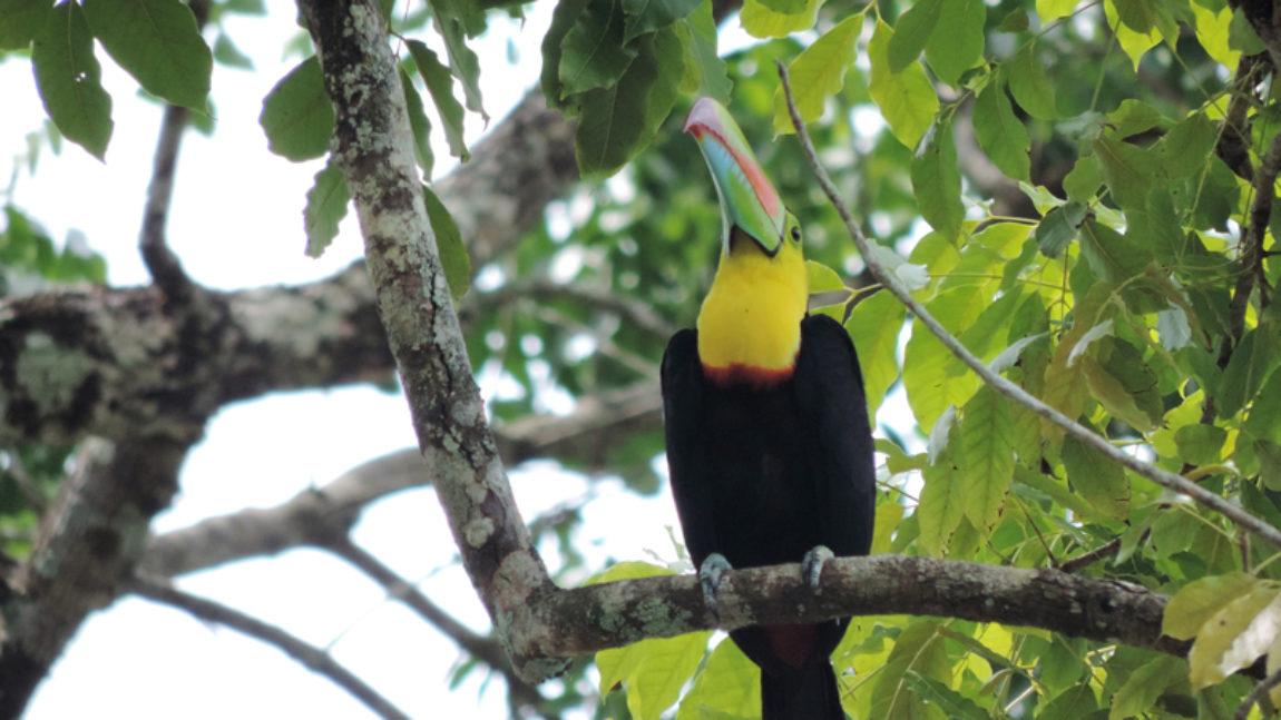 The Avid Birdwatcher